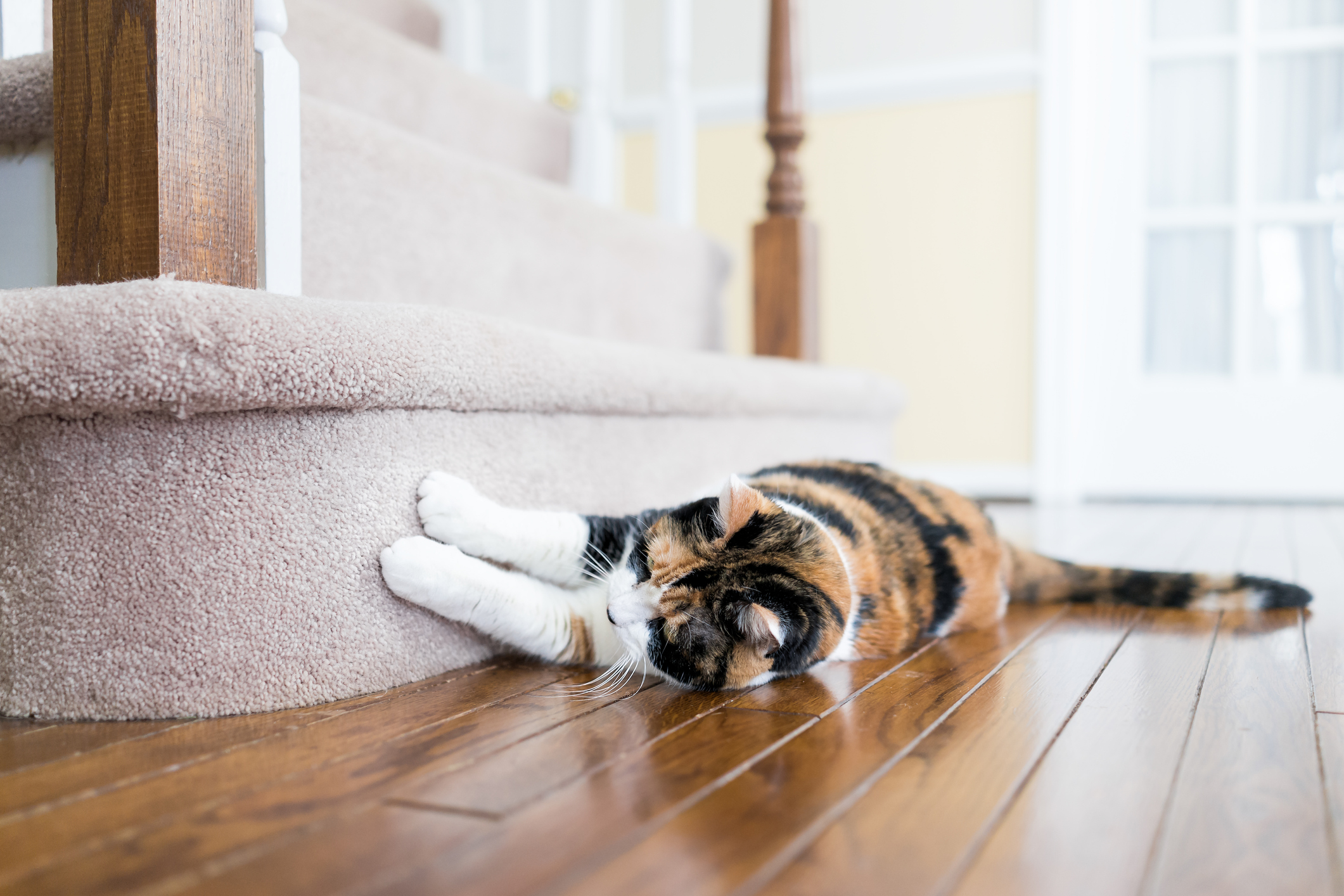 Article image for 'It's not fair': Landlords fear new pet rental laws will leave them out of pocket