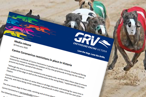 Article image for Canine coronavirus: Greyhounds entering Victoria to be isolated amid outbreak