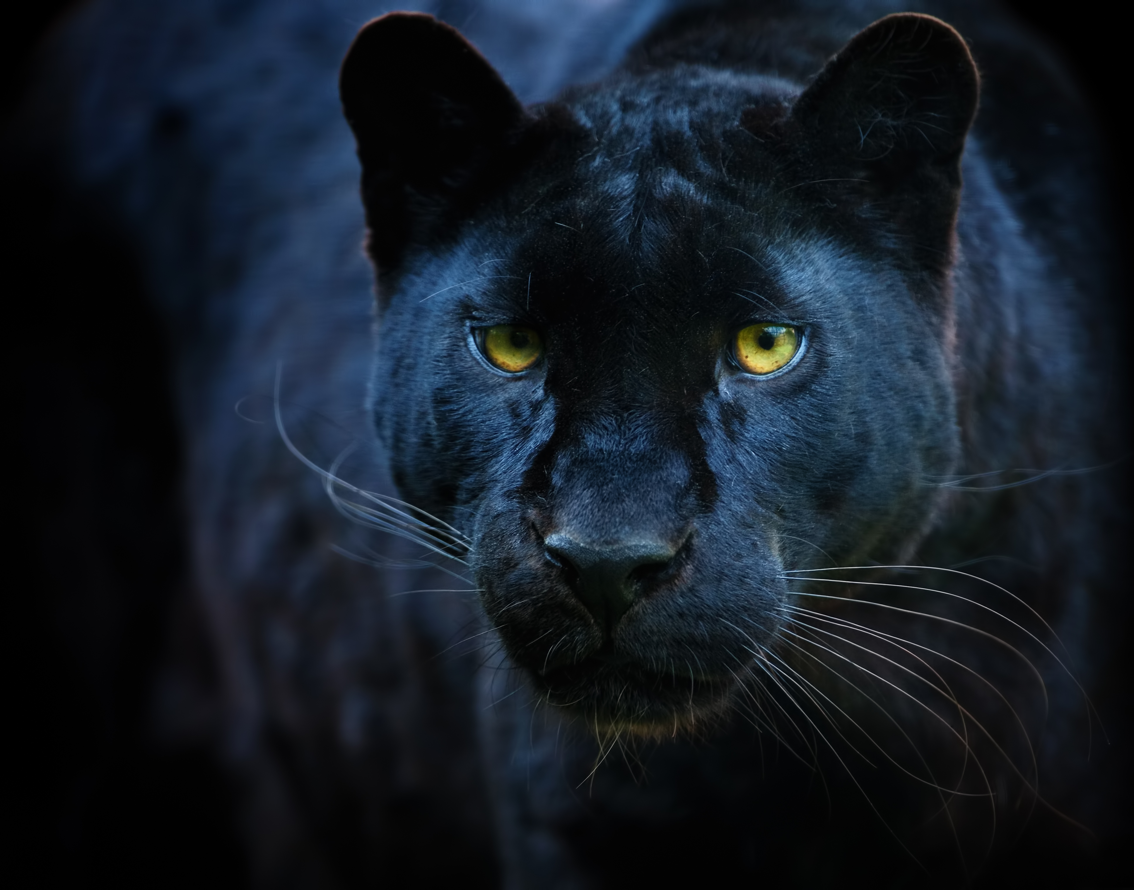 Article image for Why Vaughan King is convinced Australian big cats exist
