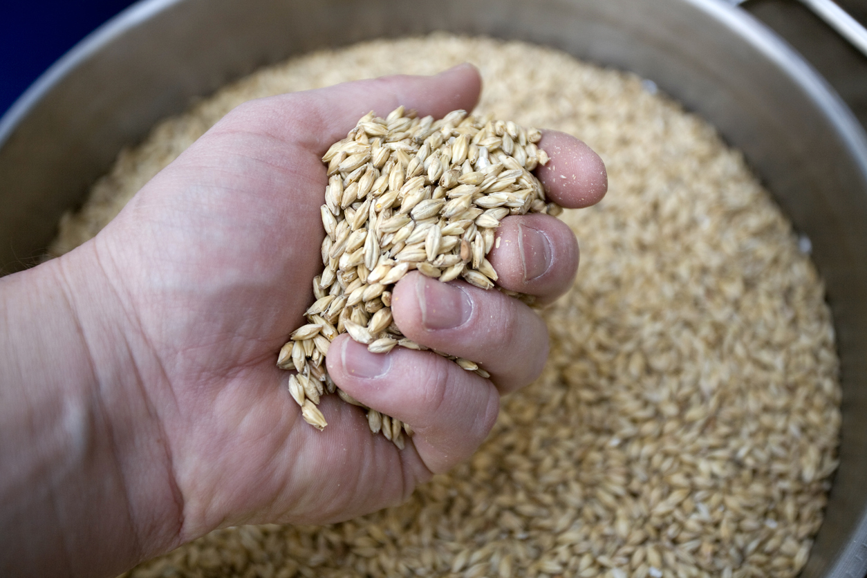 'The timing is ironical': Grain industry doubtful over Chinese trade retribution