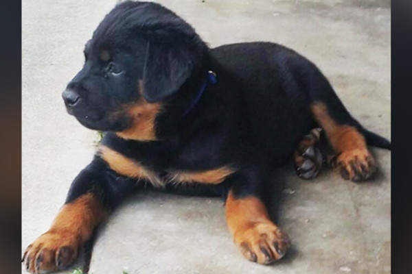 Article image for Puppy snatched in January dog-napping found safe and well