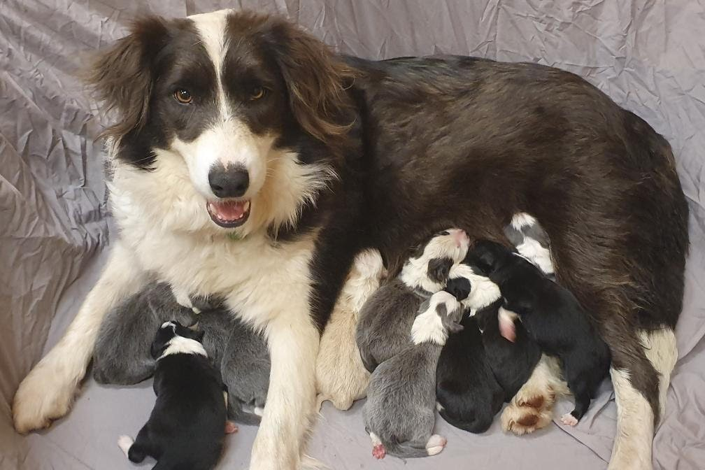 Article image for Flossy gives birth to pup set to help family grieving after Eastern Freeway tragedy
