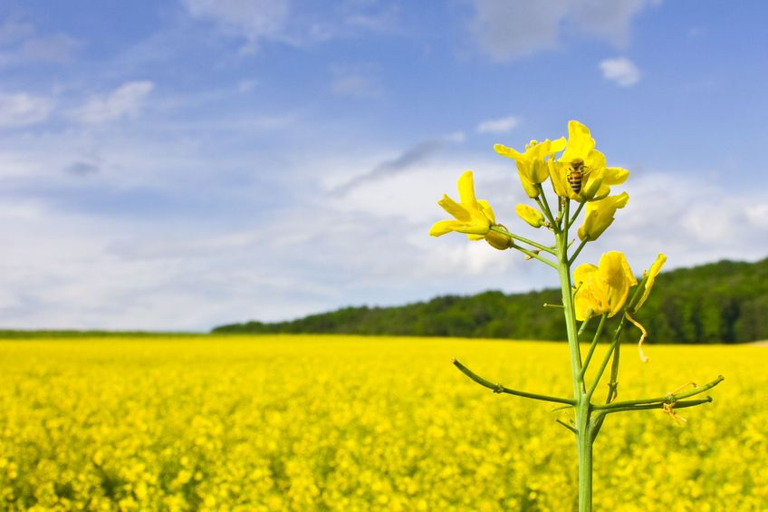 Promising outlook for agriculture