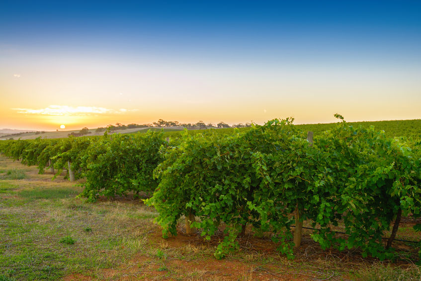"""Wineries slammed for """"disappointing"""" conduct"""