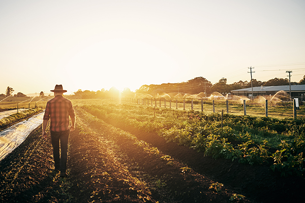 Article image for ACCC to investigate regulations between farmers, processors and retailers
