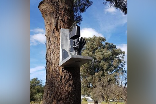 Article image for What is it? The unusual tree adornment that's puzzling Diamond Creek residents