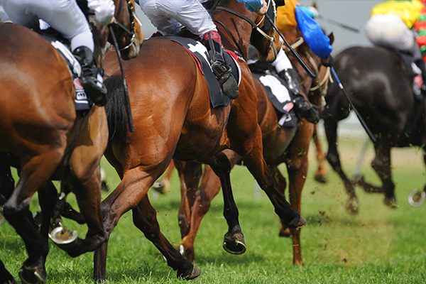 Article image for Racing Victoria moves to ban whip use on horses