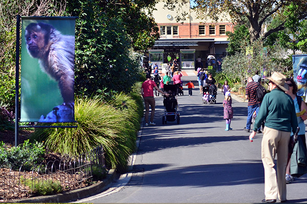 Article image for Rush on tickets as Melbourne's zoos reopen