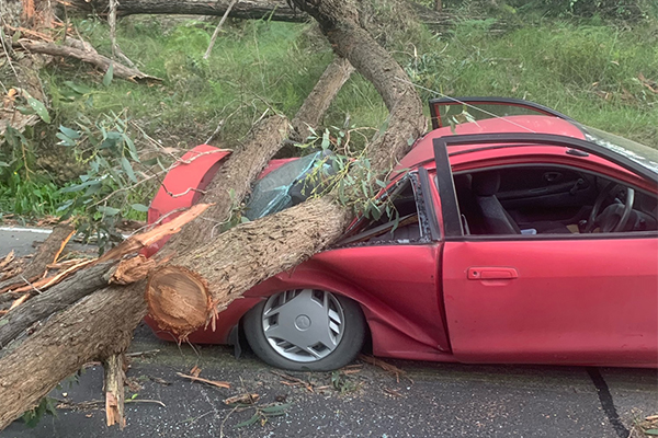 Article image for Thousands without power after wild winds bring down trees in Melbourne's outer-east