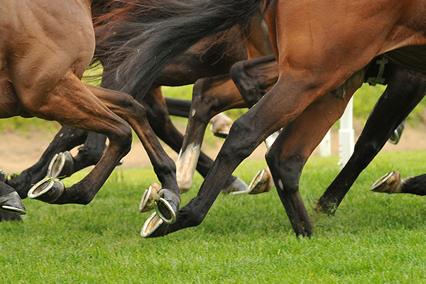 Article image for LATEST: Government backs down on Cox Plate crowds