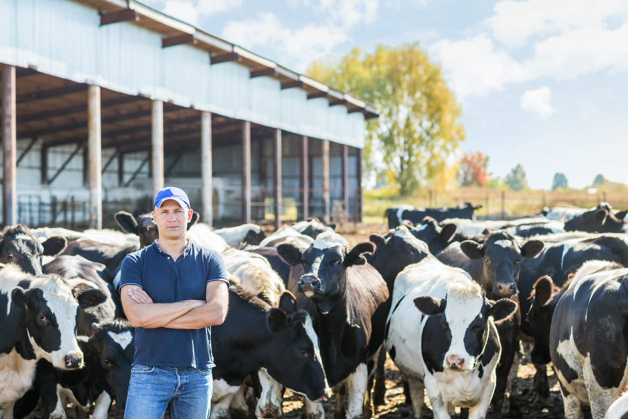 Article image for Bega Cheese buys Lion Dairy and Drinks in transformational $534 million deal