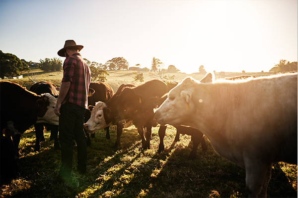 Article image for Victorian farmers rejoice amid 'best season in their lifetimes'