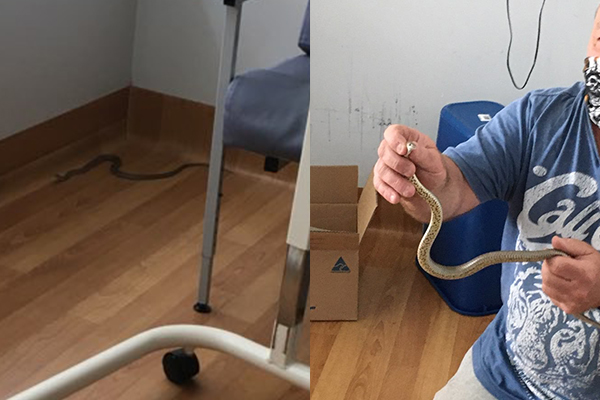 RUMOUR CONFIRMED: Snake slithers into hospital ward