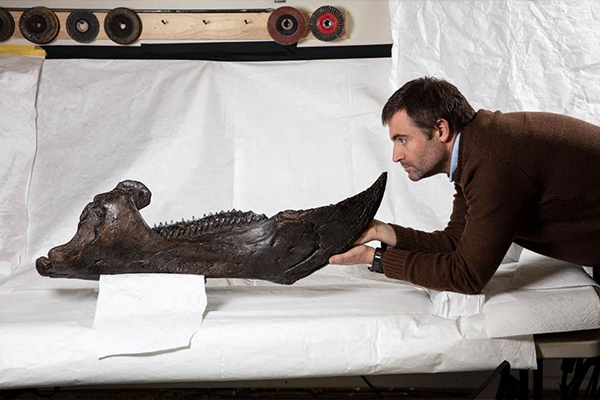 Article image for One of the world's most significant dinosaur discoveries is coming to Melbourne