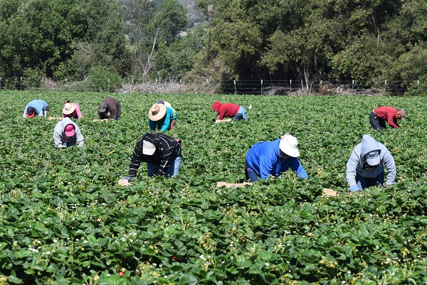 Article image for Seasonal workers to arrive in Victoria after convoluted deal reached