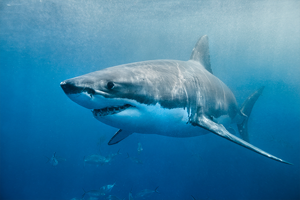 Article image for Australia was the world's deadly shark attack capital in 2020