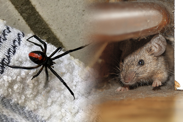 Article image for Pest plague: Melbourne has been inundated by insects, rodents and spiders