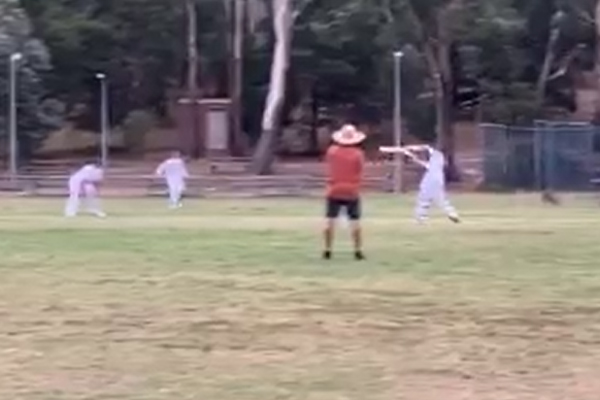 Extra fielders 'hop to it' during country cricket match!