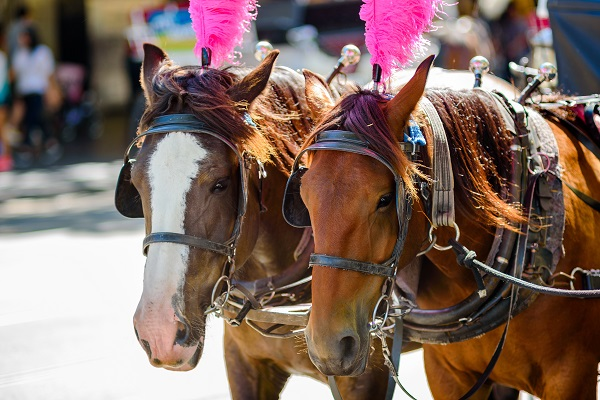 Article image for Greens plan to end Melbourne's horse war