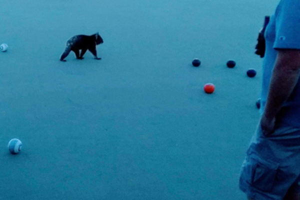 Barefoot bowls brought to a halt by cuddly pitch invader