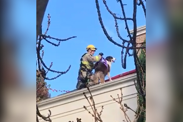 Article image for VIDEO: Firefighters rescue dog after Toorak adventure goes wrong