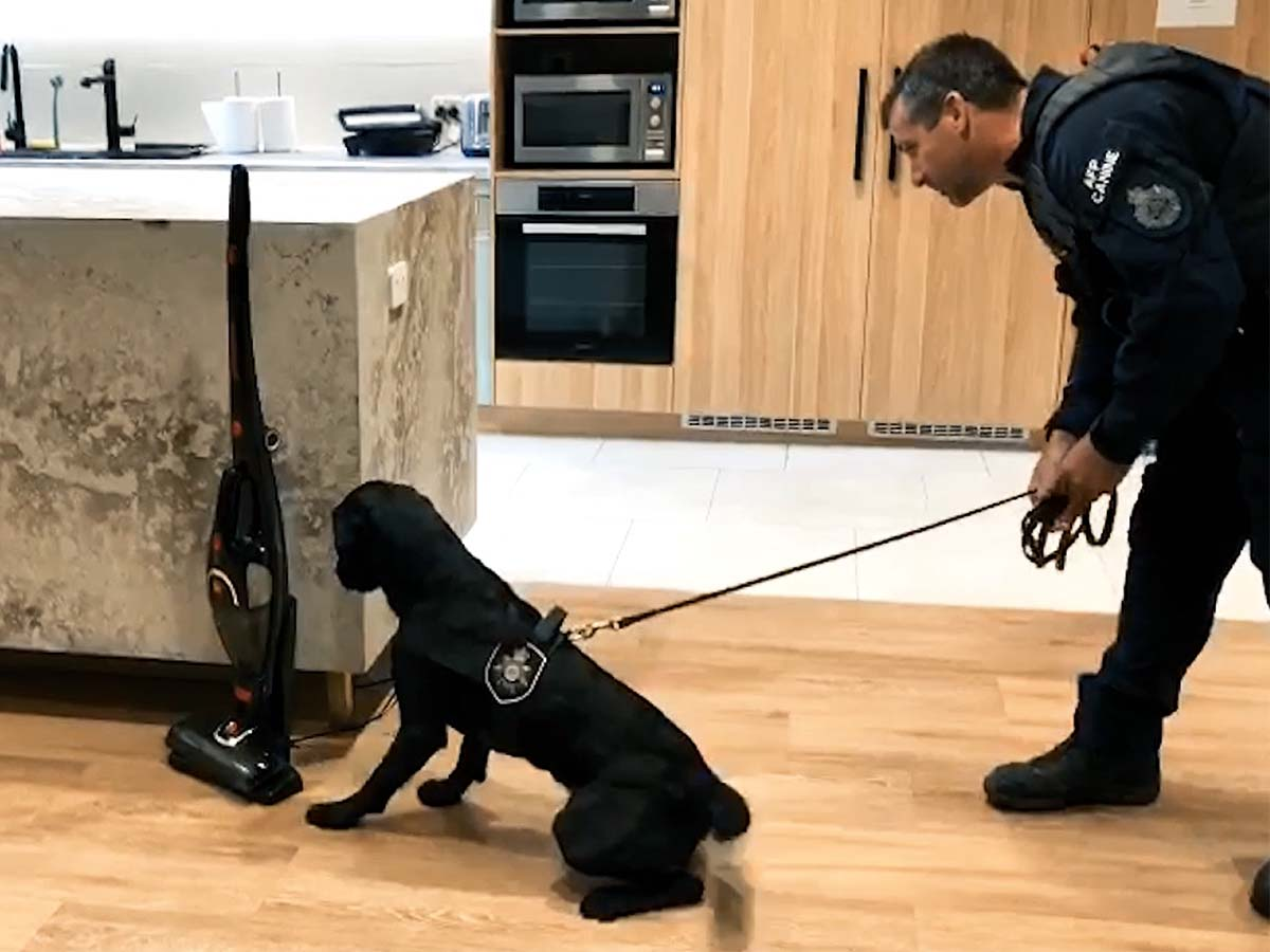 Article image for How tech dogs are sniffing out criminals