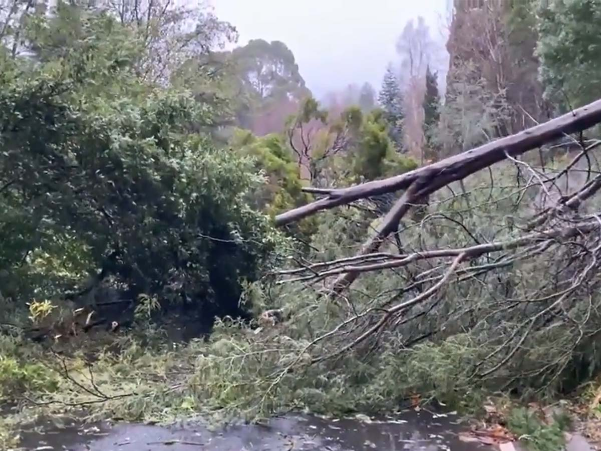 Article image for AusNet 'incredibly apologetic' as blow delivered to thousands of Victorians still without power