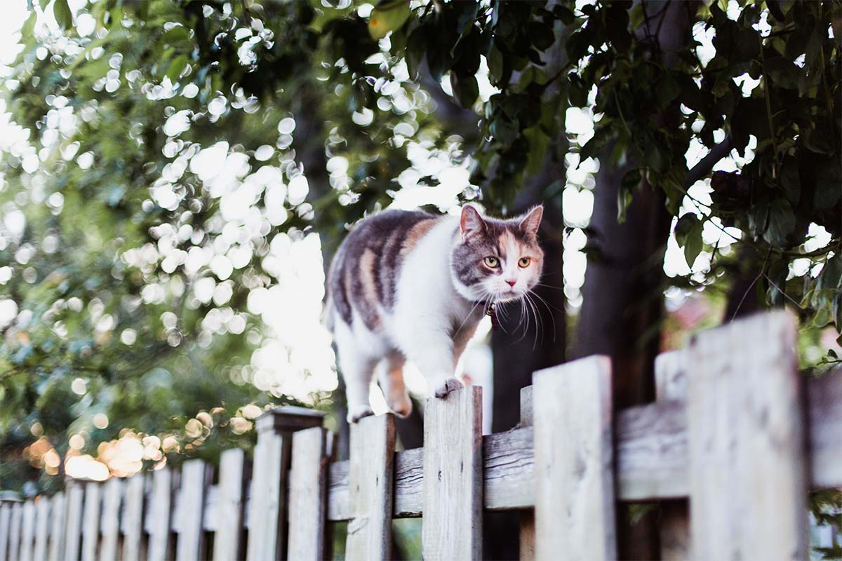 Article image for Residents in part of Melbourne to face fines if their cats stray from home at any time