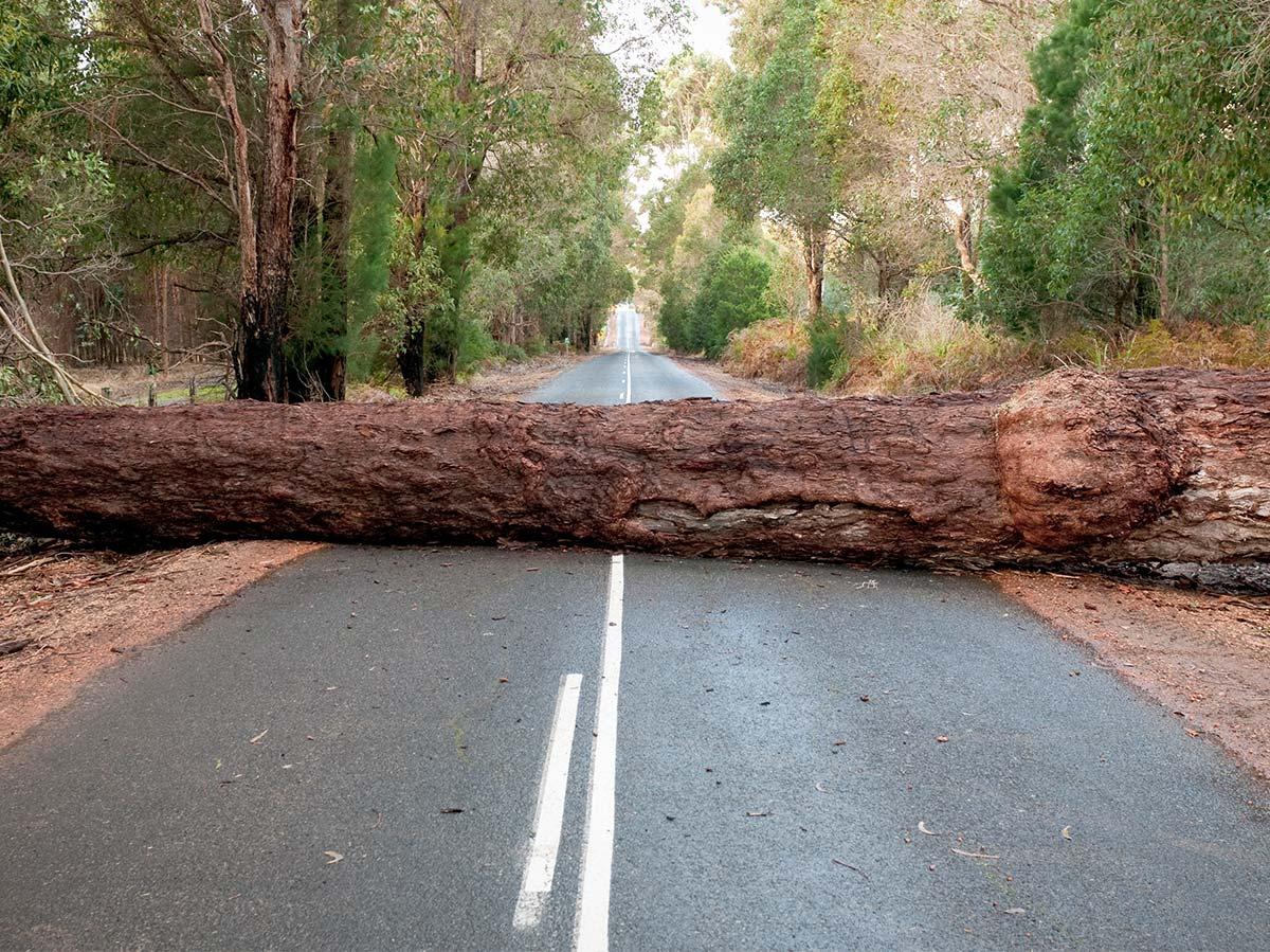 Tree fallen across road