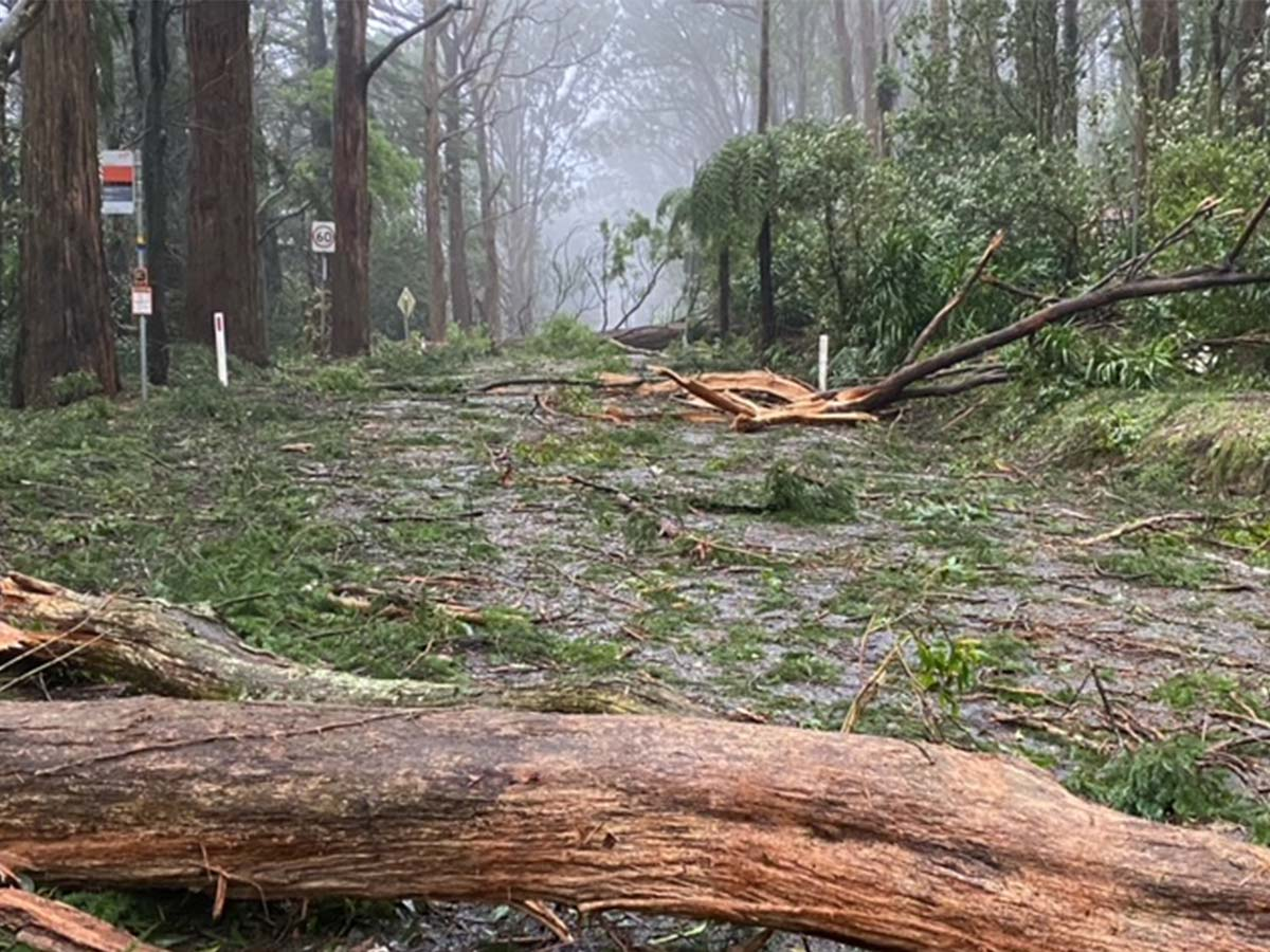 Victoria has asked for only five ADF personnel to help with storm disaster relief