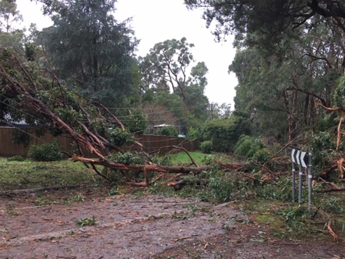 Article image for 'A huge amount' of Victorian homes still without power after five days