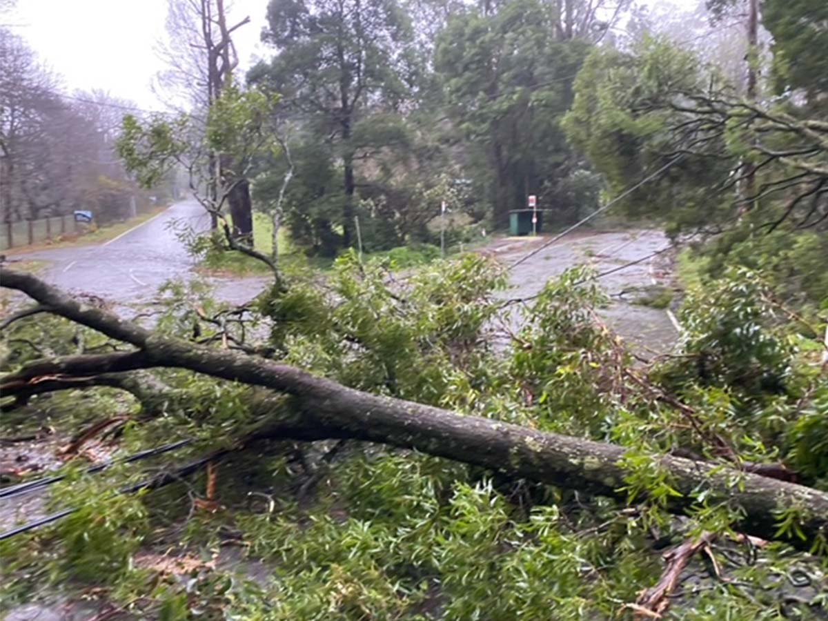 Article image for Some Victorian homes may be without power well into next week
