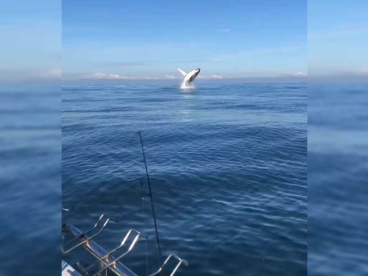Article image for 'Stunning' video: Fishing family have incredible close encounter with humpback whales