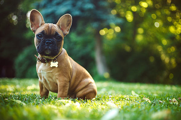 'Ethical questions' asked over breeding of designer dogs