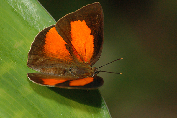 Article image for How a butterfly derailed a multi-million dollar rail project