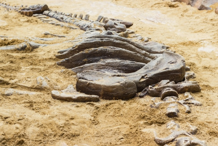 Article image for How a Queensland family stumbled upon Australia's biggest ever dinosaur discovery