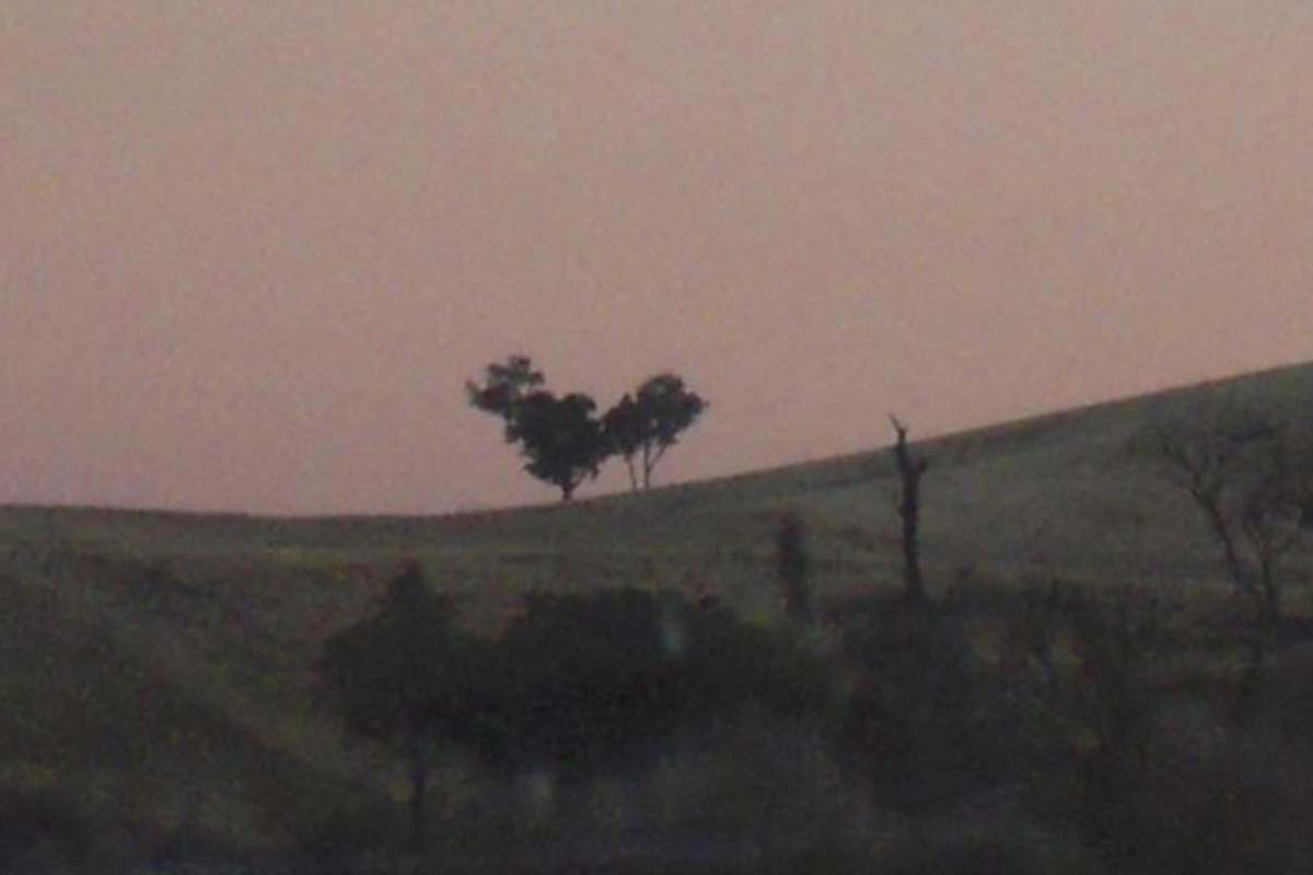 Article image for The 'Rooster Tree' sends 3AW Drive into a spin!