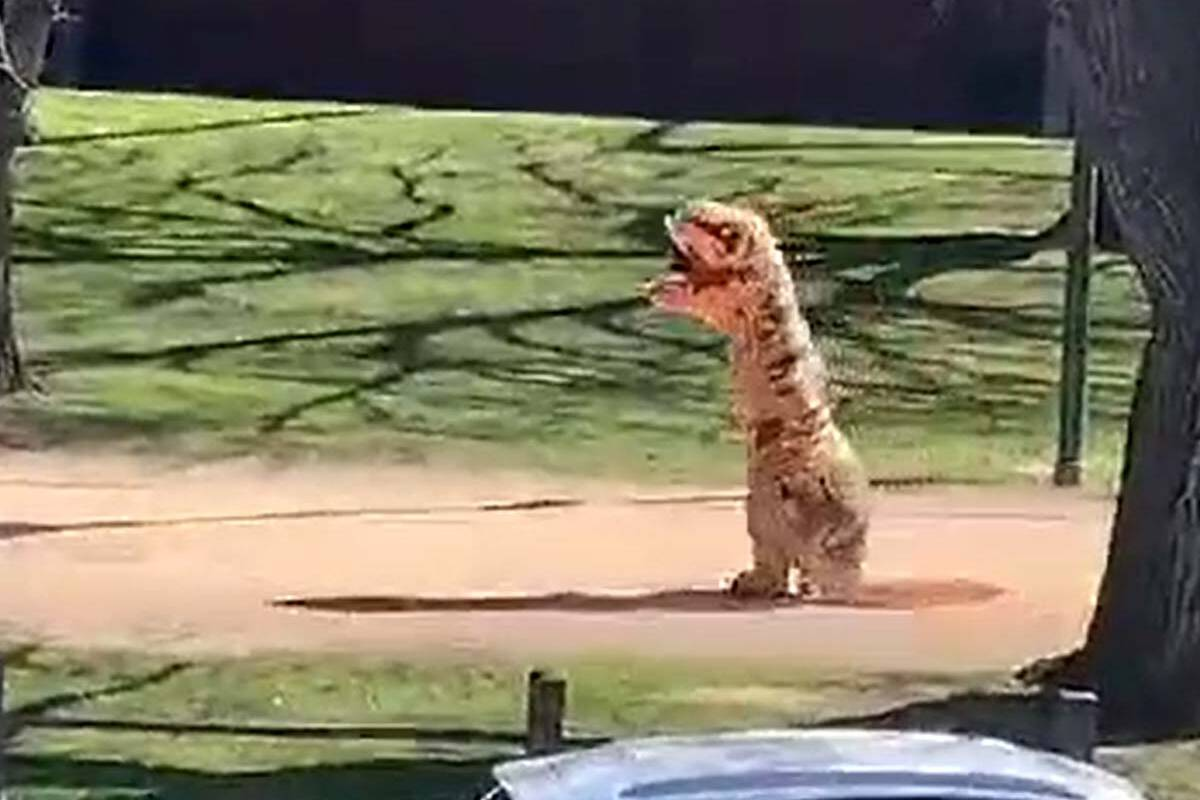 Article image for Meet the boy who donned a dinosaur costume and cut laps of Princes Park
