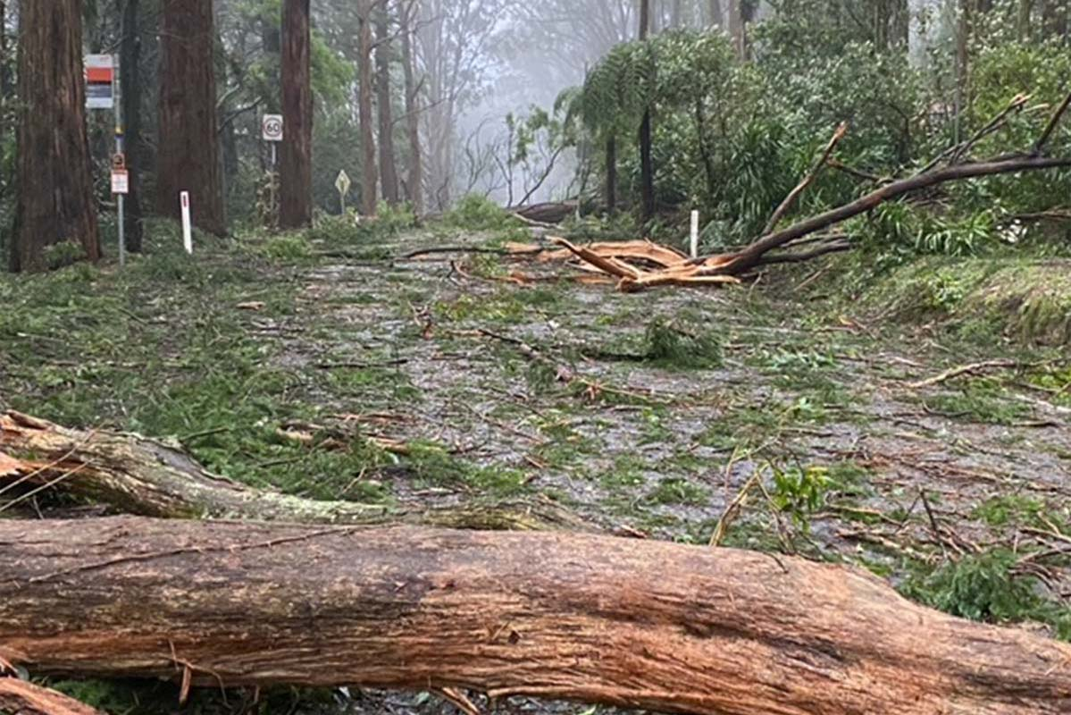 Article image for Storm-hit council fears it'll have to cut services as disaster relief funding lags