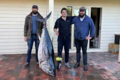 How three novice Victorian fishermen bagged the 'biggest tuna of the season'
