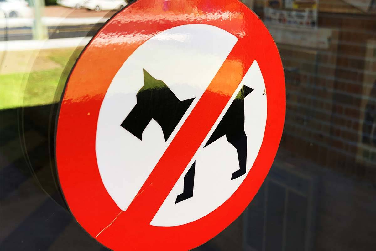 Article image for Council considering ban on dogs in popular Victorian tourist town's main streets