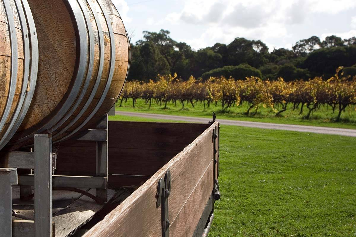 Article image for Victorian wineries are falling 'through another crack' as they battle to stay afloat