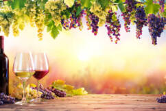 Container crisis hits wine exports