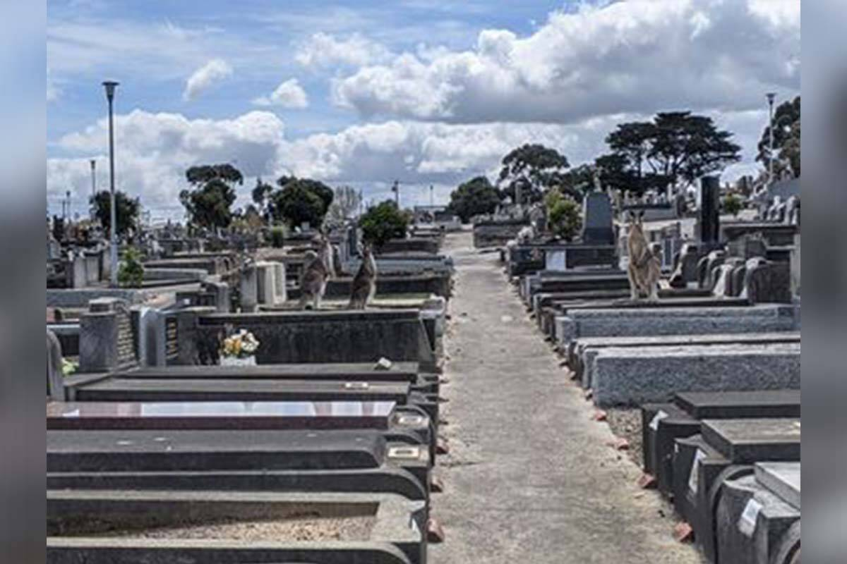 Article image for The sight at Preston Cemetery that brought a smile to a funeral director's face